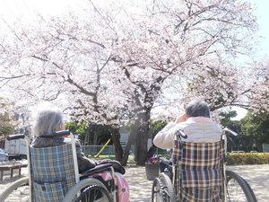 篠崎明生苑II お花見毎年お花見の季節になると、ご入居者様と桜を観に外出致します。